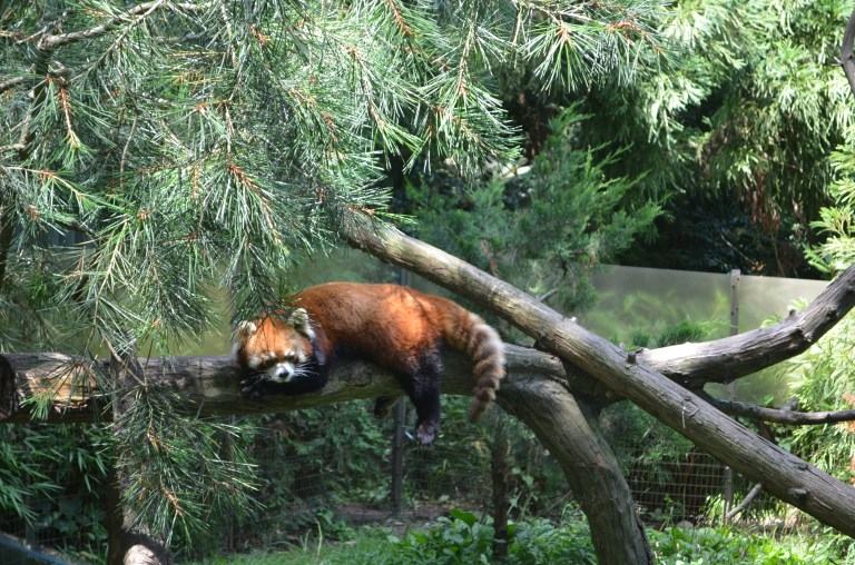 Prospect Park Zoo (16)