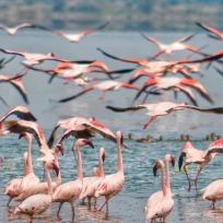 Lake Naivasha, Kenya