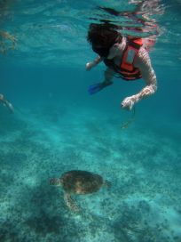 Turtle Diving in Mexico